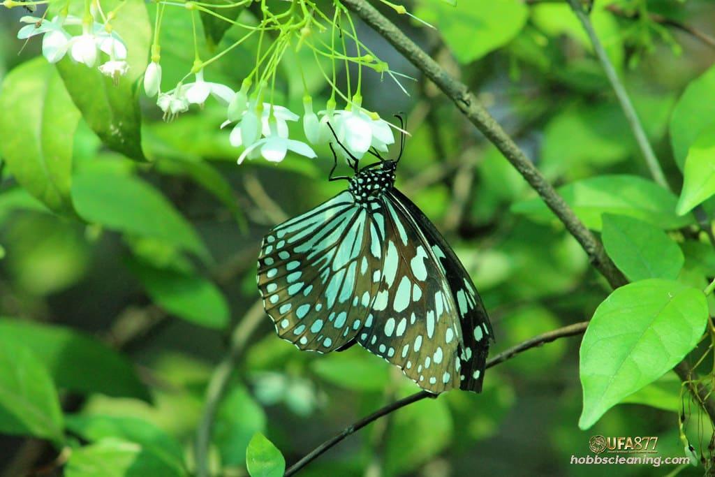 สวนผีเสื้อและแมลงกรุงเทพ